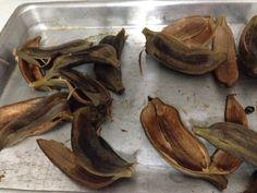 Testando Receitas: Farinha de Banana Verde