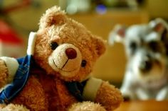 Teddy bear and dog - (#107609) - High Quality and Resolution Wallpapers on hqWallbase.com