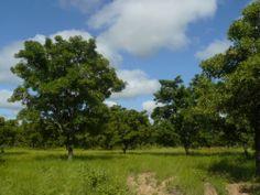 Richard Smith, BURKINA FASO 2013-2014, Conseiller en environnement. (Français)