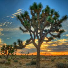 Joshua Tree National Park: Top Wow Spots - Sunset