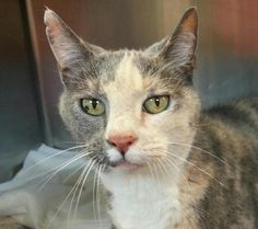 Sweet little Buttons is cute as, well....a button! This two year old girl was surrendered for no...