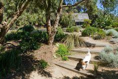 Landscape Ideas For Backyard Bush Garden, Hillside Garden, Sloped Garden, Sloped Backyard, Country Landscaping, Modern Landscaping, Landscaping Plants, Landscaping Ideas, Australian Native Garden