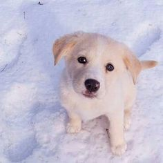 This is cute snowy playing in the snow..