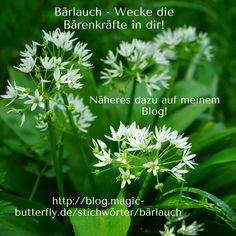 Kraut, Parsley, Pesto, Butter, Herbs, Plants, Herb, Plant, Preserves