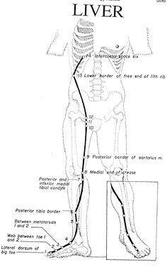 Favor Energy Flow By Paying Attention To Details. Tongue Position - 1912x3082 - jpeg