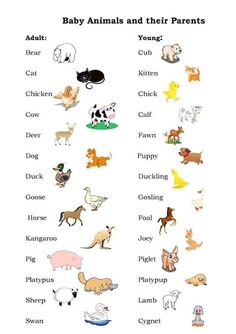 English vocabulary, baby animals and their parents English vocabulary, baby animals and their parents Cours de langues Petit cours d'anglais English vocabulary, baby animals and their parents Learning English For Kids, Teaching English Grammar, English Lessons For Kids, English Worksheets For Kids, English Writing Skills, Kids English, English Vocabulary Words, Learn English Words, English Activities
