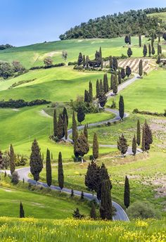 Road with curves and cypresses in Tuscany, Italy  @Michaelsusanno @Emmammerrick @emmasusanno  #TwinFlamesTravelingtheUniverseTogetherMARRIEDwith5CHILDRENforETERNITY  #DESTINATION:TUSCANY,ITALY