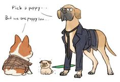 kingsdog: the fluffy service