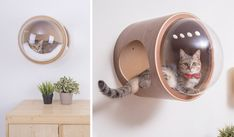 This design wooden cat kennel looks like a space capsule Crazy Cat Lady, Crazy Cats, Niche Chat, Cat Kennel, Amor Animal, Small Fireplace, Cat Playground, Wooden Cat, Cat Accessories