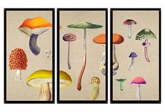 One Kings Lane - If These Walls Could Talk - Di Fonzo, Mushroom Mini Triptych Cool Art, Awesome Art, Triptych, Art Decor, Home Decor, Printmaking, Wonderland, Art Pieces, Stuffed Mushrooms