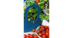 Bio kertápolás, bio növényvédelem a vegyszermentes kertápoláshoz. Kertészeti webáruház kiszállítással. Stuffed Peppers, Vegetables, Food, Stuffed Pepper, Essen, Vegetable Recipes, Meals, Yemek, Stuffed Sweet Peppers