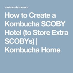 How to Create a Kombucha SCOBY Hotel (to Store Extra SCOBYs) | Kombucha Home
