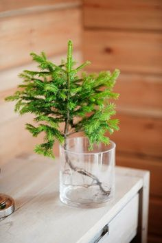Little tree in water. Enjoy a tree that needs to be taken anyhow. Christmas Love, Winter Christmas, Christmas Crafts, Merry Christmas, Christmas Decorations, Holiday Decor, Natural Christmas, Rue Verte, Deco Floral