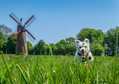 Our beautiful county is full of scenic places to go and discover with your furry companions.