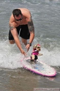 Surfer girl! #dogs #pets #YorkshireTerriers Facebook.com/sodoggonefunny
