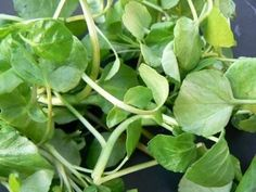 Watercress - good source of iodine, helps energize cleansing enzymes in the liver, and, like celery, it's a natural diuretic. Vegetable Salad, Top Alkaline Foods, Best Cancer Fighting Foods, Dinner Party Starters, Natural Diuretic, Colorful Vegetables, Green Bell Peppers, Medicinal Plants, Salads