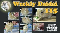 Weekly daidai 115