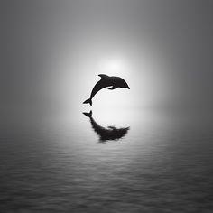 Photo Awakening by Josep Sumalla on 500px