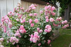 Floral Wreath, Canon Eos, Mini, Creative, Plants, Decor, Climbing Roses, Climbing Roses, Bees