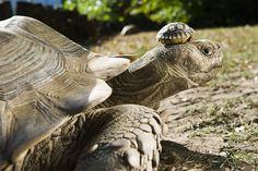 16. Tortuga de 140 años con su pequeña hija de 5 años.