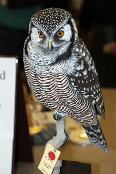 2013 Canadian National Wildfowl Championship