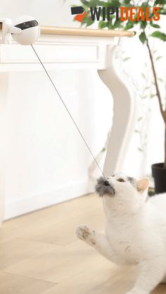 Cat Toy Lifting Electric Falling Interactive Plush Ball Toy for Ragdoll Cats Interactive Cat Toys, Types Of Cats, Unique Cats, Small Cat, Cat Health, Fur Pom Pom, Toy Sale, Cool Cats, Cats And Kittens