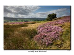 Melmerby Moor In Coverdale, UK by SteveMG, via Flickr August 2009, English heather