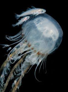 【海 sea】 水中写真コンテスト受賞、驚きの11作品
