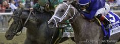 Kentucky Derby 2014 contenders Havana and Honor Code battle to the wire in the Champagne!