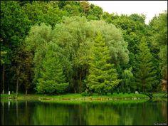 sikonda - Google-keresés River, Google, Outdoor, Outdoors, Outdoor Games, Outdoor Living, Rivers