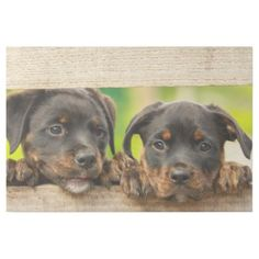 Cute rottweiler puppies peeking through fence gallery wrap - dog puppy dogs doggy pup hound love pet best friend