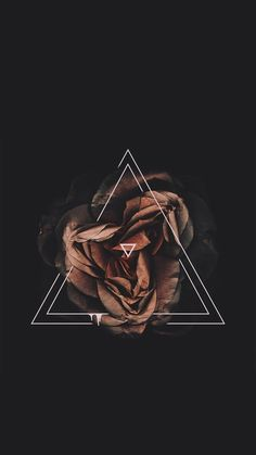 Imagem de flowers, rose, and black
