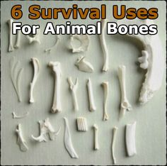6 Survival Uses for Animal Bones » The Preppers Life