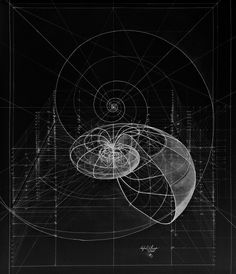 drawing space nature universe Sketch pattern Cosmos pi maths mathematics geometry cosmic universal Golden Ratio Spiral sacred geometry phi geometrical fibonacci fibonacci spiral chaosophia218 Nautilus Shell proportion nautilus golden mean fibonacci number logarithmic spiral universal pattern logarith szmmetrz
