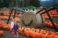 Hay spider and pumpkin patch Hay spider and pumpkin patch Pumpkin Patch Farm, A Pumpkin, Pumpkin House, Pumpkin Ideas, Fall Halloween, Halloween Crafts, Halloween Decorations, Hay Bale Decorations, Fall Yard Decor