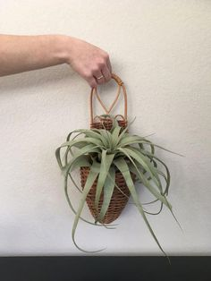 Vintage Boho hanging planter. Perfect for your favorite succulent or air plant! Add to your gallery wall or entry way for a touch of green, chic boho flavor! A couple breaks in the wicker, but is purely cosmetic as seen in the 4th photo. Measurements: 14 L x 5 W Shipping: FREE shipping in the #Wall-HangingFountains