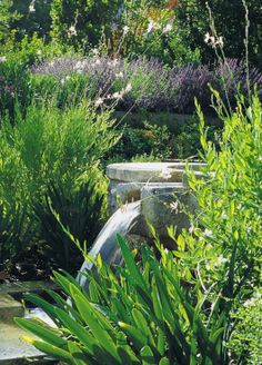 Water feature surrounded by white gaura & lavender.