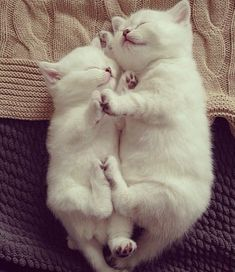 Kitty snuggle time.