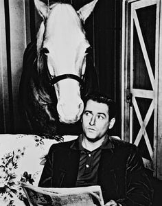 """Mr. Ed--""""a horse is a horse, of course of course...."""""""