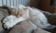 Look at my cat feet cat