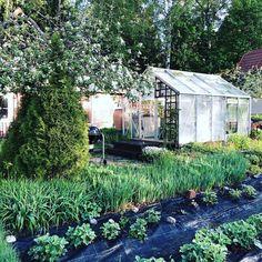 Oasen blomstrat till » Sevendays Kitchen, Plants, Cooking, Kitchens, Plant, Cuisine, Cucina, Planets