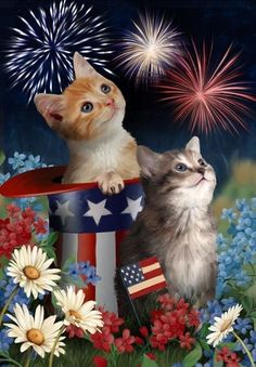 Patriotic Kitties Fourth of July Decorative Outdoor Garden Flag Happy Fourth Of July, July 4th, Fourth Of July Memes, Siamese Kittens, Cats And Kittens, I Love Cats, Cute Cats, Funny Cats, Patriotic Pictures