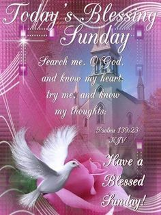 Good Morning, Happy Sunday, I pray that you have a safe and blessed day! Sunday Morning Prayer, Sunday Morning Images, Good Sunday Morning, Morning Blessings, Morning Prayers, Morning Wish, Good Morning Quotes, Happy Sunday, Good Morning Greetings