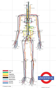 A Map of the Human Body - Mind the Gap!