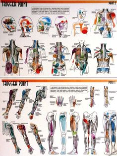 trigger point at one time or another have felt the many pains from the Fibro Trigger points. thanks Michelle great chart!!!