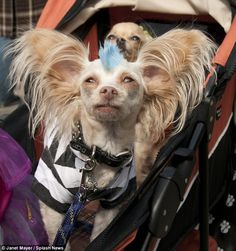 Halloween dog costumes: Pooches dressed to impress for annual ...