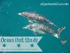 Homeschooling Unit Study – Ocean