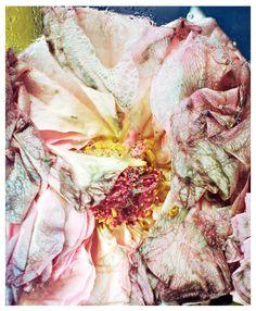 Novembre Issue 5 | So Represent florian joye
