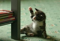 19 Awesome Pictures of Cats Who Are Excellent at Being Ninja - We Love Cats and…