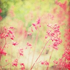 """""""Secret Garden by Kristie  - Can someone reveal to me, please, the secret name of the flowers?"""